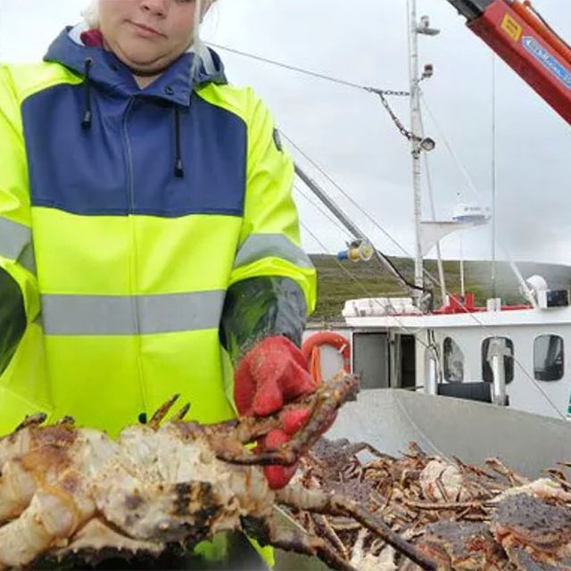 King crab fishing in north norway